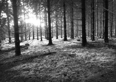 Skogen vid Norvalla, Nora