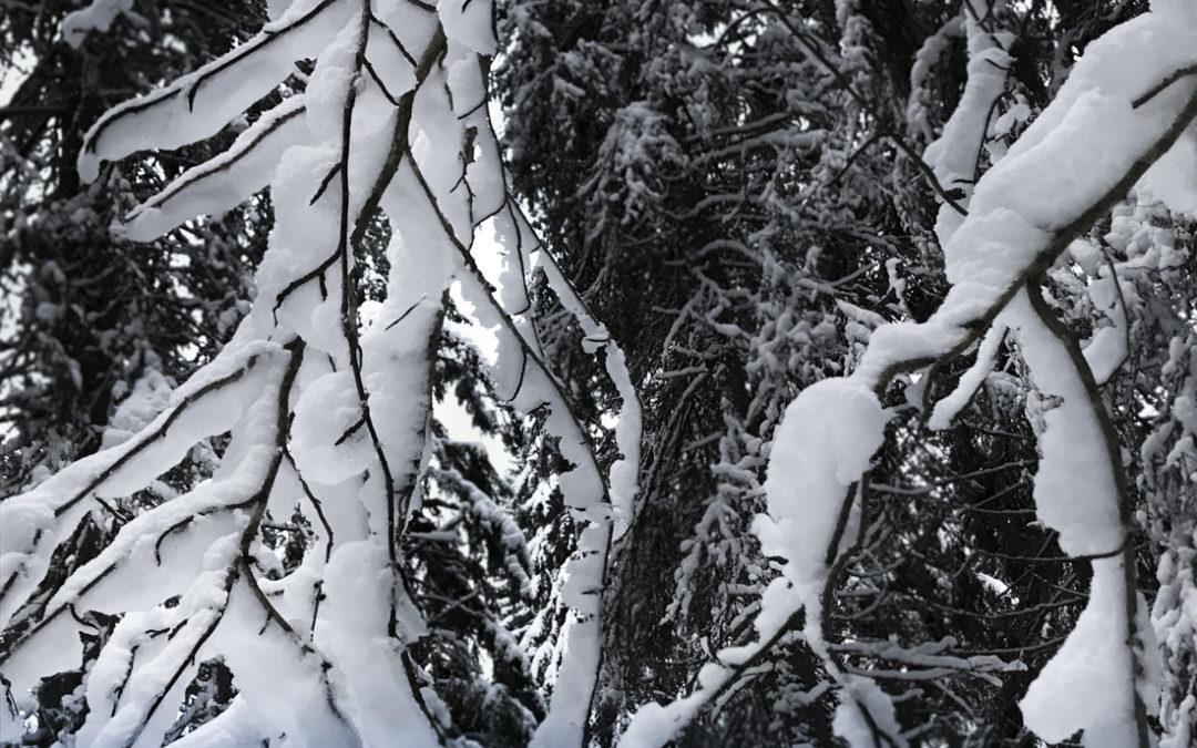 När snön stilar